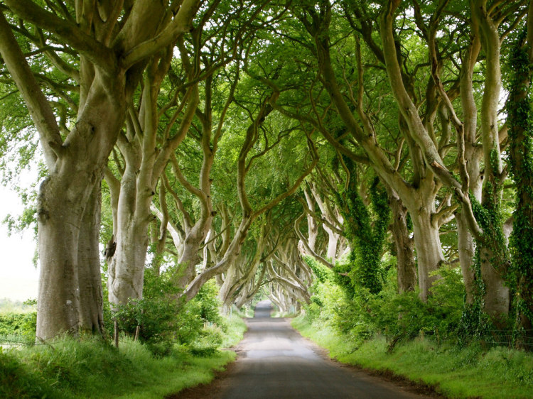 Localitzacions de Juego de Tronos:  Camino Real - The Dark Hedges County Antrim